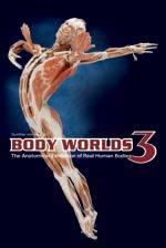 Body Worlds 3 PromotionalImage