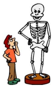 Student and Skeleton